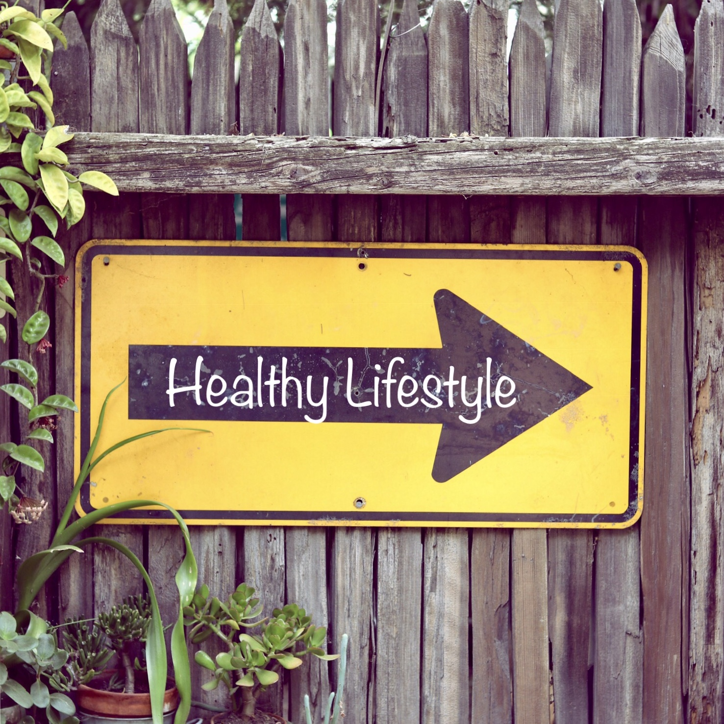 Dieting vs. Healthy Lifestyle Mentality